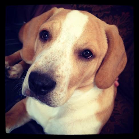Meet Boudin: Polaskcantel Pup